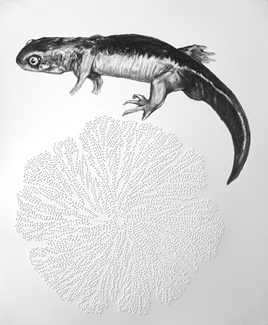Tanya Chaly, Imperfect Indicators- Deformed Salamander with Spore